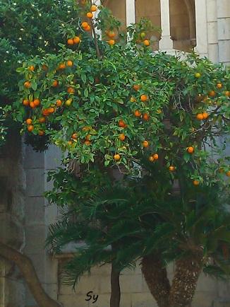orangen2